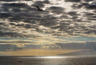 Meer, Sonne, Wolken, meeresschutzgebiete, hummer, positive nachrichten