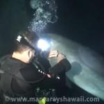 Delfin bittet Tauchergruppe um Hilfe