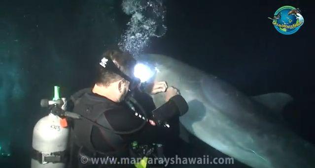 Taucher rettet Delfin, positive nachrichten