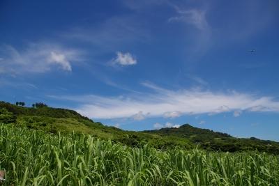 Zuckerrohr,positive nachrichten, nachhaltige rohstoffe, fluessigholz