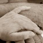 Geschwister nach 65 Jahren wieder vereint