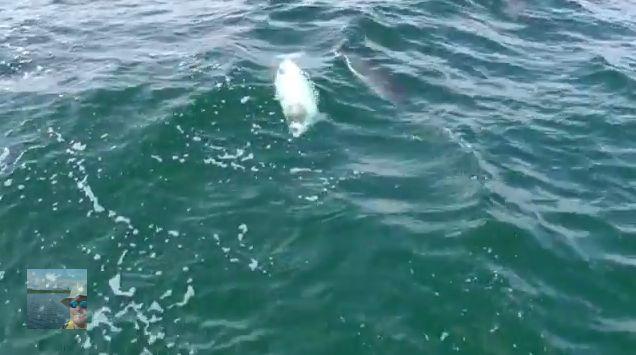 weisser Schweinswal, Ostsee, Wale, positive nachrichten