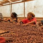Eine Schokolade die Leben verändert