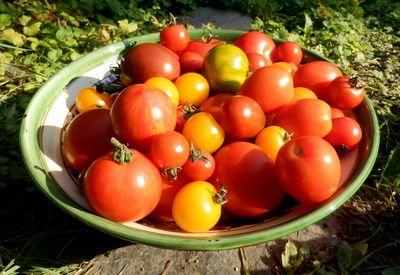 Bio-Tomaten, oekologischer Anbau, biologischer anbau, positive nachrichten