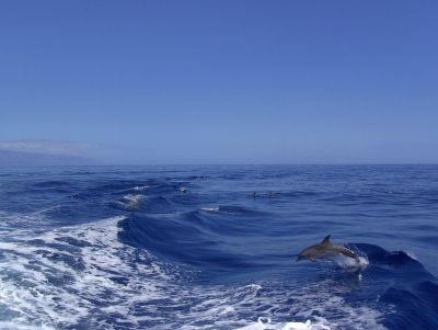 delfine im meer, junger delfin rettet meeressaeuger, positive nachrichten