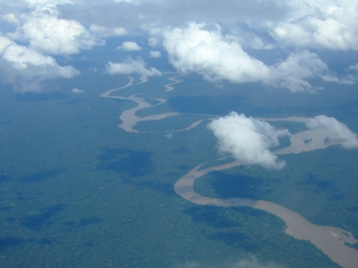 Regenwald, co2, positive nachrichten, entwarnung, forscher
