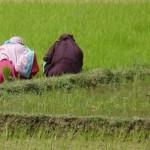 Biologischer Anbau führt zu Rekord-Ernte