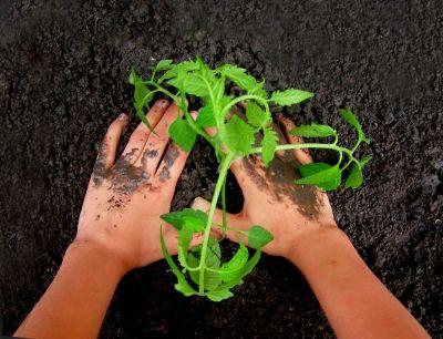 einpflanzen, erde, strom, plant-e. positive nachrichten