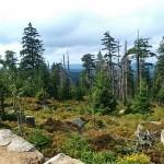 Urwald am Brocken als CO2-Speicher