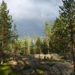 Weltweit stärkstes Biomasse-Kraftwerk in Finnland