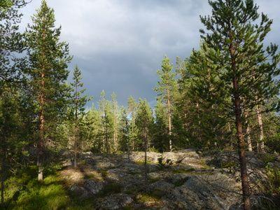 Finnland, Wald am Polarkreis, positive nachrichten