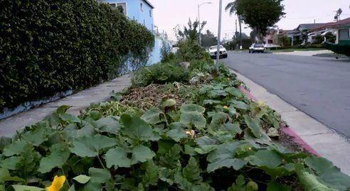 Futter-Wald in LA, positive nachrichten