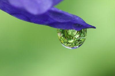 Wassertropfen an Bluete, positive nachrichten, wasserstoff herstellung