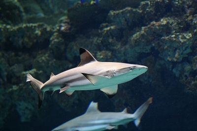 Haie, Haifischflossen-Suppe, positive nachrichten