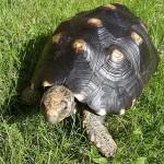 Schildkröte überlebt 30 Jahre in Abstellkammer