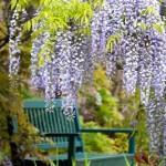 Städtische Grünflächen helfen beim Glücklichsein