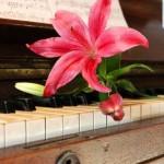 Musikunterricht und seine positiven Folgen für das Gehirn