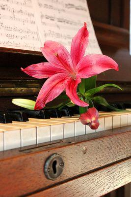 Lilie, Klavier, Musik, positive nachrichten, zitate