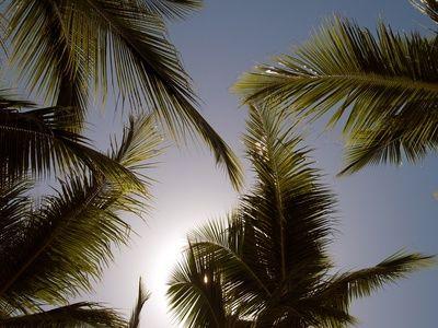Pazifik, Palmen spenden Schatten