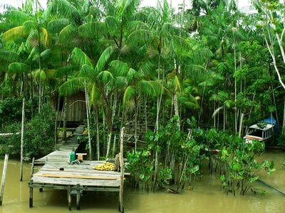 Wohnen am Amazonas, Regenwald