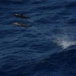 Indien – Verbot für Delfine in Gefangenschaft