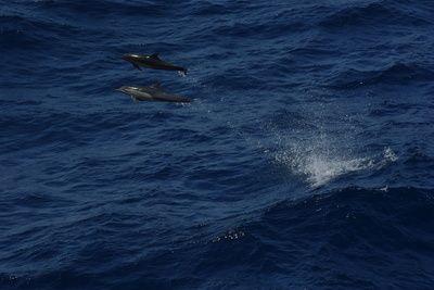 Delfine in Freiheit, positive nachrichten, delfinarien, indien