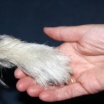 Singapur hat das Thema Tierschutz in seine Lehrpläne aufgenommen