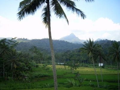 Java, Indonesien, positive nachrichten, regenwald, urwald