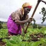 Senegal: Tausende Gemeinden wollen Ökodörfer werden
