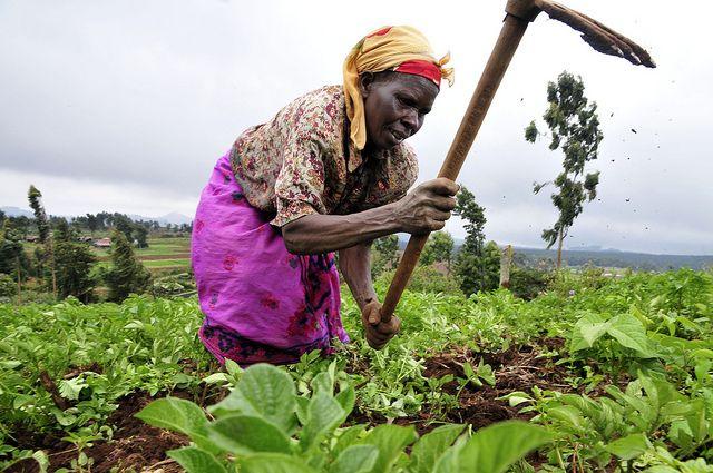 Kenianische Baeuerin, hunger, bio, hilfe