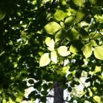 Forscher holen Elektrizität aus Pflanzen