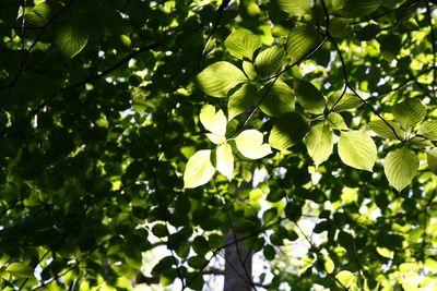 gruene blaetter, photosynthese, positive nachrichten, Solarzellen, Solartechnologie