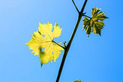 Forscher kopieren Fotosynthese und produzieren dadurch Wasser- und Sauerstoff. © twinlili / pixelio.de