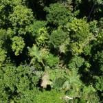 Android-Smartphones sollen Regenwald schützen