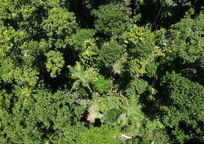 Regenwald, Android-Smartphones, positive nachrichten