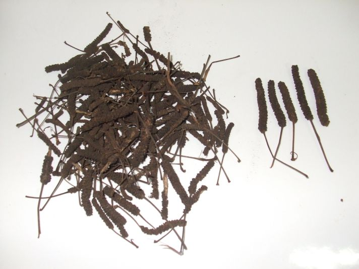 Samen von Kap-Pfeffer, heilpflanzen, piper capensis, krebs, tumore, positive nachrichten