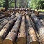 Thermovacuum-Verfahren macht Holz noch widerstandsfähiger