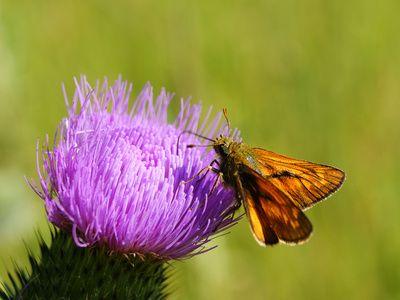 Felder, Blumen, Landwirtschaft, Schmetterling, positive nachrichten