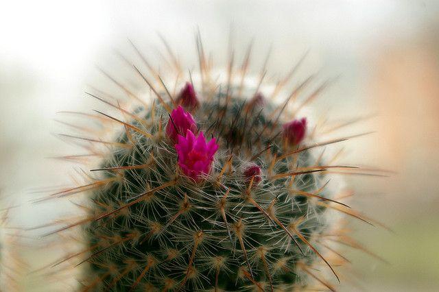 Kaktus, Nadeln, reinigen, Gewaesser, Oelkatastrophe, positive nachrichten