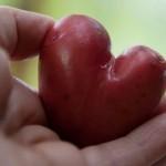 ″Ugly Fruits″ - ein Platz für optische ″Mängel″