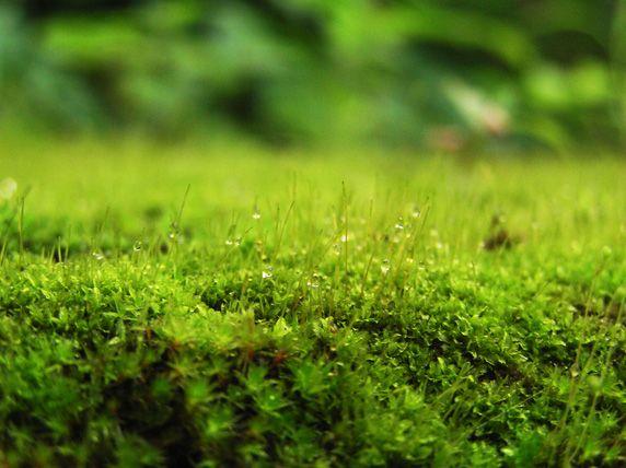 Moos, luftreinigung, positive nachrichten, moospflanzen, feinstaub