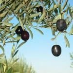 Steirischer Kraftwerksbauer setzt auf Olivenkerne