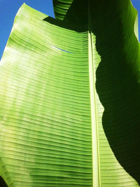 Palmen-Blatt, positive nachrichten