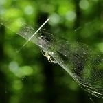 Spinnen haben eigene Persönlichkeiten