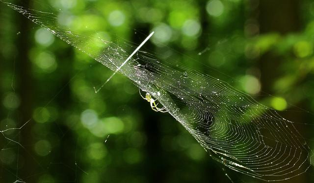 Spinne, Spinnennetz, positive nachrichten