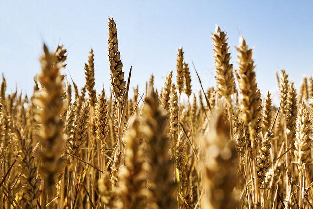 Weizenfeld, der wahre Weg, Paulo Coelho, der wahre weg, paulo coelho