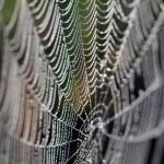 Neuer Werkstoff aus Kohlenstoff und Spinnenseide
