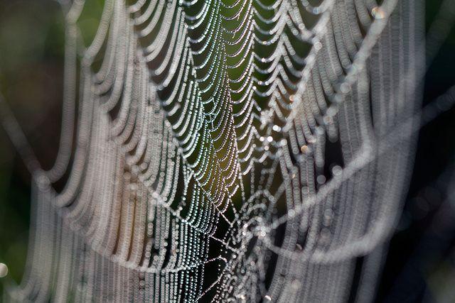 Spinnennetz, Spinnenseide, positive nachrichten, Werkstoff, Kohlenstoff