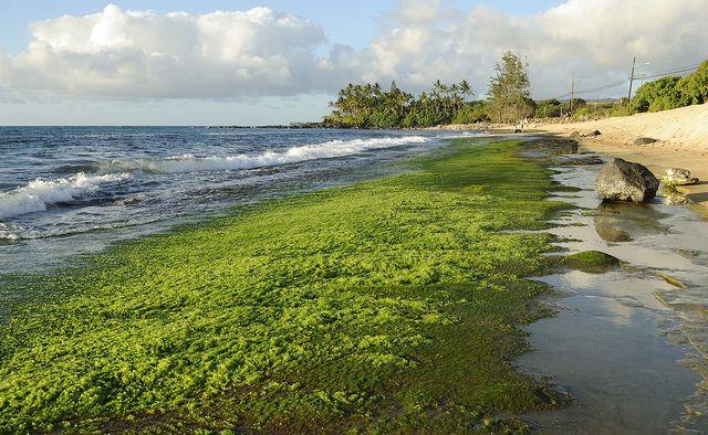 algae, algen, SAT, positive nachrichten