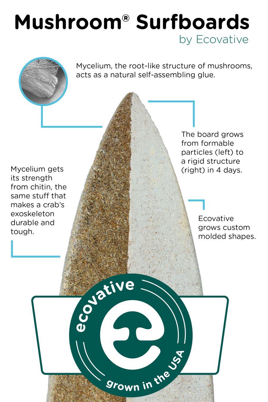 Mushroom Surfboards, positive nachrichten, surfen